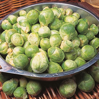Brussels Sprout Cascade F1 AGM Seeds