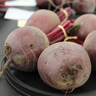 Beetroot Pablo F1 AGM Seeds