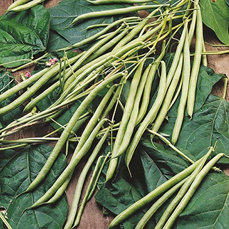 French Bean (Climbing) Isabel Seeds