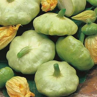Squash (Summer) Patty Pan Green Tint Seeds