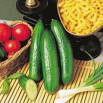 Cucumber Passandra F1 Seeds