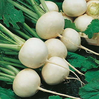Turnip Snowball Seeds