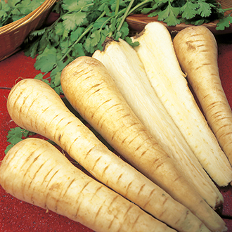 Parsnip Tender & True AGM Seeds