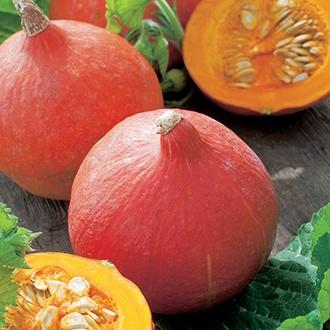 Organic Squash (Winter) Uchiki Kuri Seeds