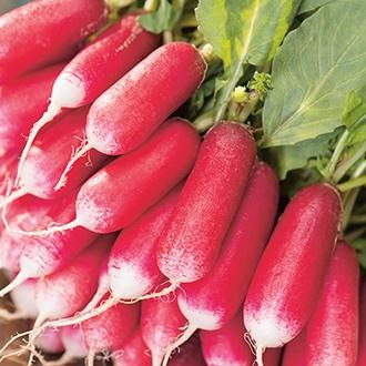 Radish French Breakfast 3 Seeds