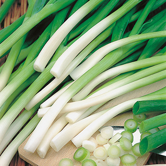 Onion (Spring) Ishikura AGM Seed Tape