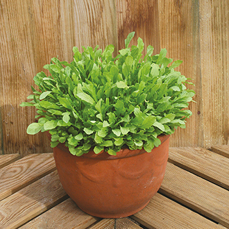 Mixed Lettuce Leaves Seed Mats
