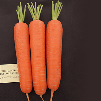 Carrot Sweet Candle F1 Seeds