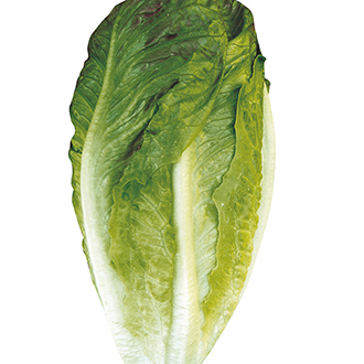 Lettuce Cuore Seeds