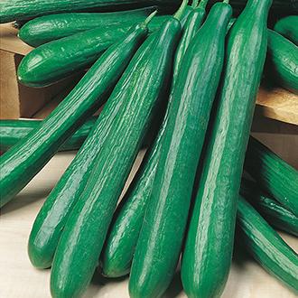 Cucumber (Indoor) Louisa F1 Seeds