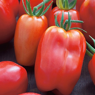 Tomato San Marzano 3 Seeds