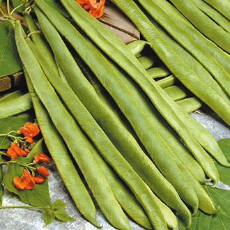 Runner Bean (Red Flowered) Scarlet Empire Seeds