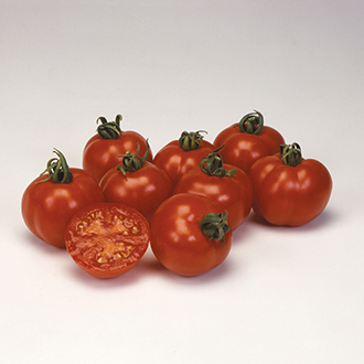 Tomato (Heritage) Bloody Butcher Seeds