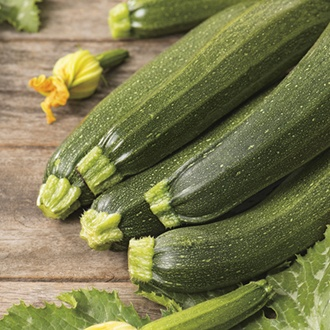 Courgette Defender F1 AGM Seeds