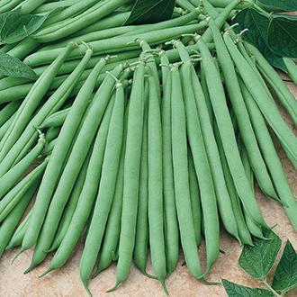 French Bean (Dwarf) Primavera Seeds