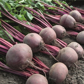 Baby Beet Action Seeds