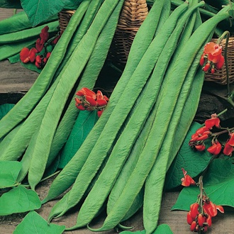 Runner Bean Polestar Pint-Seeds