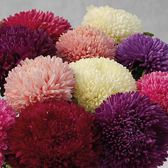 Aster Balloon Mixed Flower Seeds