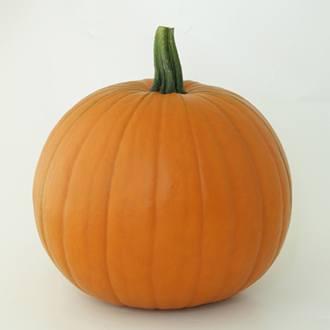 Pumpkin Wicked F1