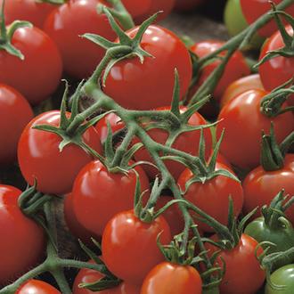 Tomato Red Alert