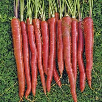 Carrot Malbec F1 Seeds