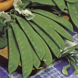Sweet Sahara (mangetout) Seeds
