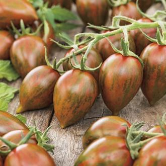 Tomato Shimmer F1 Seeds
