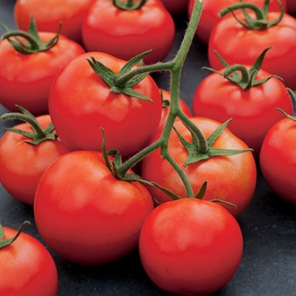 Tomato Mountain Merit F1 Seeds