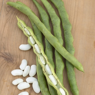 French Bean (Climbing) Lazy Housewife Seeds