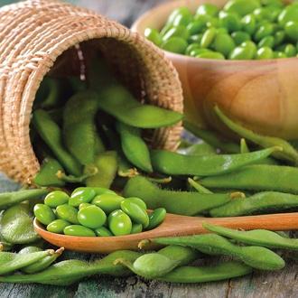 Soya Bean Fiskeby V Seeds