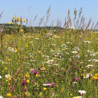 Wildflower Pollinators Mix Flower Seeds
