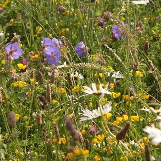 Wildflower Wildlife Attracting Mix Flower Seeds