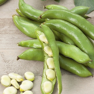 Broad Bean Bartek Seeds