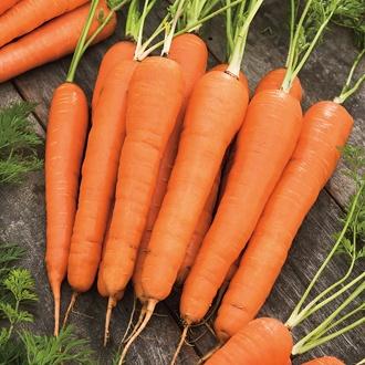 Carrot Mercurio F1 Seeds