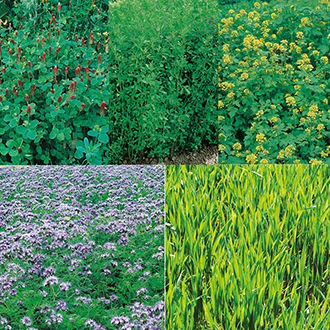 Green Manure Seeds Collection