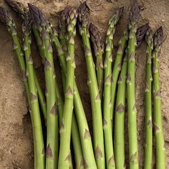 Asparagus Greenic Crowns