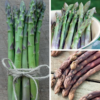 Asparagus Crown Collection