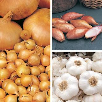 Autumn Planting Onion, Shallot & Garlic Collection