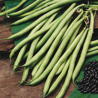 Climbing French Bean Cobra AGM Veg Plants