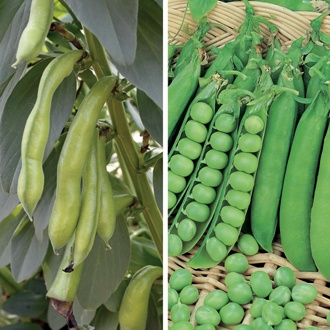 Autumn Planting Broad Bean and Pea Seed Collection