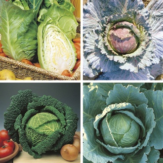 Cabbage Plant Collection