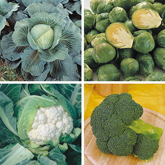 Brassica Veg Plant Collection