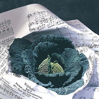 Cabbage Rigoleto F1 Veg Plants