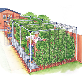 Fruit Cage - Standard 6'x36'