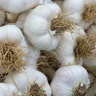 Garlic Extra Early Wight Bulbs (Hardneck)