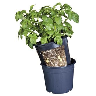 Potato Pots (3 pots)