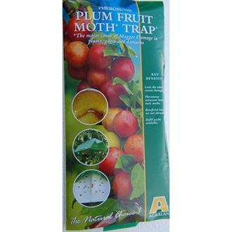 Plum Fruit Moth Trap