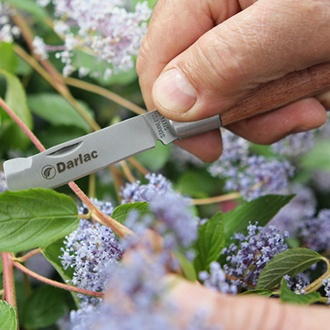 Darlac Budding Knife