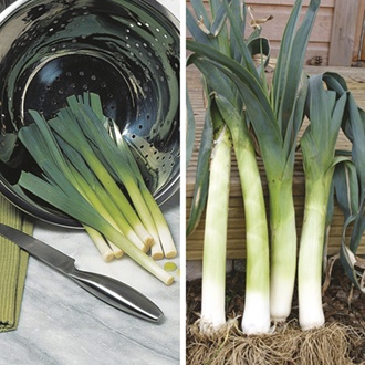 Leek Vegetable Plant Collection