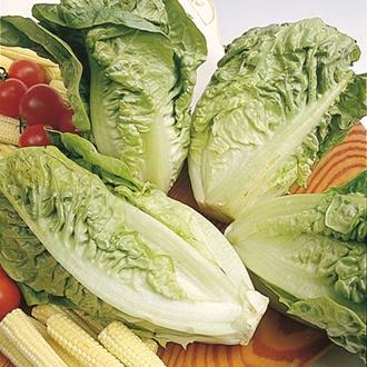 Lettuce Little Gem Delight Veg Plants